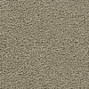Coronet Cherish Tan Cut Pile Indoor Carpet