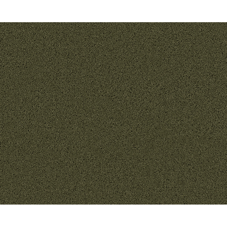 Olive Green Carpet Related Keywords amp Suggestions