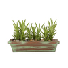 Exotic Angel Plants 1.88-Quart Aloe