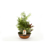 Exotic Angel Plants 1.93-Quart Croton in Planter (Ltl0014)