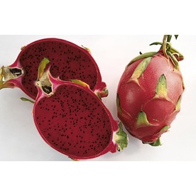 1-Gallon Dragon Fruit (Red Flesh) Small Fruit (L21823)