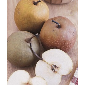  1-Count 3-N-1 Asian Pear (L10500)