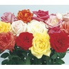 Quart Miniature Rose (L5965)