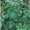3-Quart Sweet Basil  (L16804)