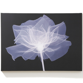 Graham & Brown 28-in W x 20-in H Canvas Wall Art