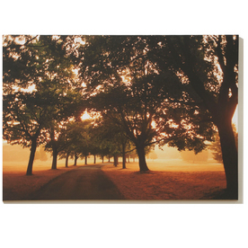 Graham &amp; Brown 40-in W x 28-in H Canvas Wall Art