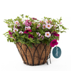 Lotus Hot Pink Jazz Black Wrought Iron Hanging Basket Kit