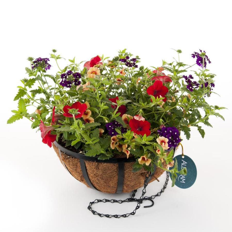 Hanging Flower Baskets At Lowes : Hampton calypso black wrought iron hanging basket kit
