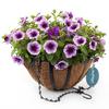 Hampton Purple Cleopatra Black Wrought Iron Hanging Basket Kit
