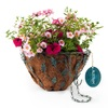 Crescent Hot Pink Jazz Antique Brass with Patina Hanging Basket Kit