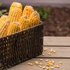 Garden Treasures Critter Food 10-lb Squirrels Corn Cobs