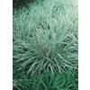 3-Quart Aztec Grass (L8297)