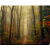 38-in W x 30-in H Landscapes Canvas
