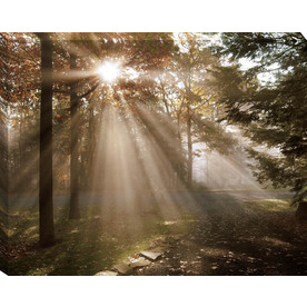 30-in W x 38-in H Photography Canvas