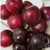  1-Count 3-N-1 Plum (L7013)