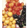  9.55 Gallon(S) 3-N-1 Cherry (L10542)