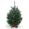 3-5-ft Fresh Fraser Fir Christmas Tree