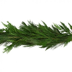 20-ft Fresh White Pine Christmas Garland