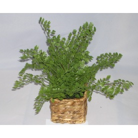 9-in Green Artificial Plant