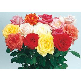 2.5-Quart Miniature Rose (L5965)
