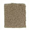 STAINMASTER PetProtect Feature Buy Pomeranian Textured Indoor Carpet