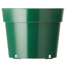 4-in H x 6-in W x 6-in D Green Plastic Indoor/Outdoor Pot