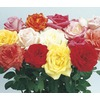 1 Pint Miniature Rose (L5965)
