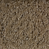 STAINMASTER Active Family Panorama Toasted Almond Fashion Forward Indoor Carpet