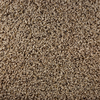 STAINMASTER Active Family Gallery Railway Textured Indoor Carpet
