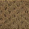 Royalty Carpet Mills STAINMASTER Active Family Gallery After Time Fashion Forward Indoor Carpet
