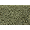 STAINMASTER Active Family Stainmaster Gallery Meadow Saxony Indoor Carpet
