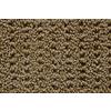 STAINMASTER Trusoft Stainmaster Gallery Wheatland Multi-Level Loop Pile Indoor Carpet