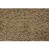 STAINMASTER Trusoft Stainmaster Gallery Blonde Cut and Loop Indoor Carpet