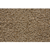 STAINMASTER Trusoft Stainmaster Gallery Portabello Cut and Loop Indoor Carpet