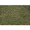 STAINMASTER Trusoft Stainmaster Gallery Verdant Cut and Loop Indoor Carpet