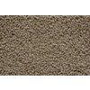STAINMASTER Trusoft Stainmaster Gallery Chalk Cut and Loop Indoor Carpet