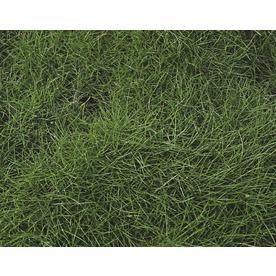 1-Flat Korean Velvet Grass (L2909)