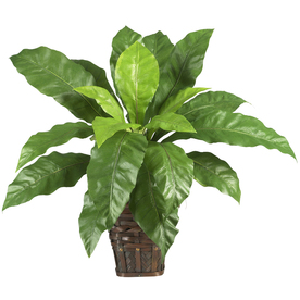 Nearly Natural 25-in Green Birdsnest Fern