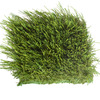 SYNLawn UltraWear I 6-in x 6-in Artificial Grass Sample