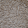 Engineered Floors Cornerstone Mustang Textured Indoor Carpet