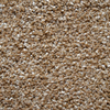 Engineered Floors Cornerstone Rio Grande Textured Indoor Carpet