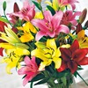 10-Pack Asiatic Lily (LW01857)
