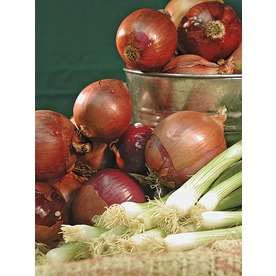 80-Pack Comred Red Onion Plant (LB22127)