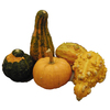 5-Pack Multiple Color Gourds