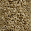 STAINMASTER Essentials Joelton Key Role Textured Indoor Carpet