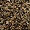 STAINMASTER Essentials Cadiz Freedom Pass Textured Indoor Carpet