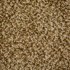 STAINMASTER Petprotect Nitro Galaxy Textured Indoor Carpet