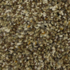 STAINMASTER PetProtect Companion Lasting Impression Textured Indoor Carpet