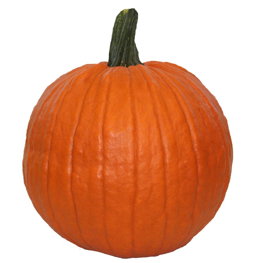 Get Carving Pumpkins for Only $1 at Lowes! (Reg. $4 - $7)