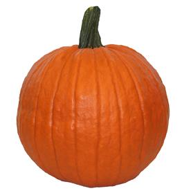 Orange Medium Carving Pumpkin